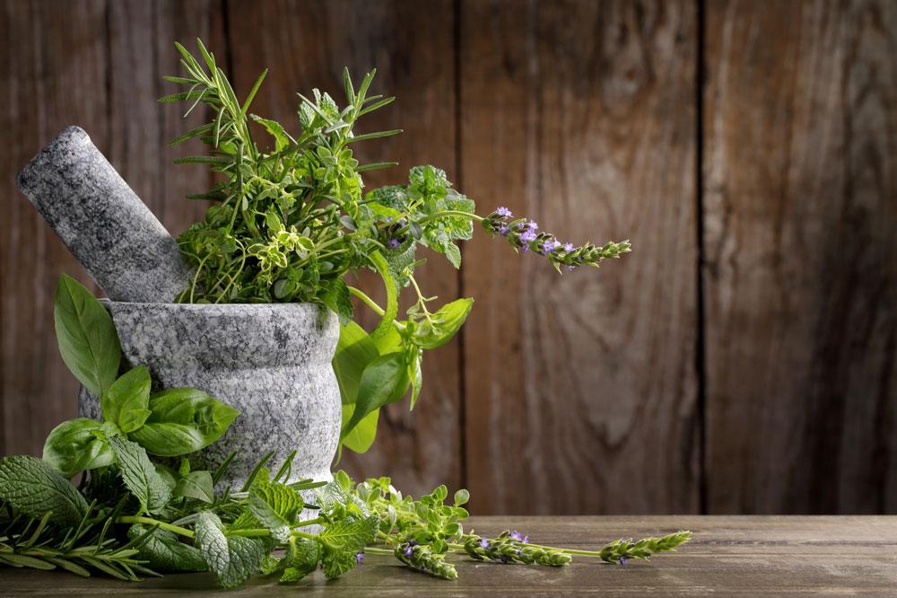 צמחים ופרחים לעיצוב הבית